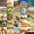 afrikansk safari — Stockfoto