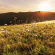 Meadow — Stock Photo #36420371