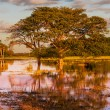 Flooded field — Stock Photo #39243253