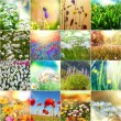 Flowers collage — Stock Photo #39428509