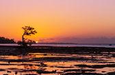 Mangrove tree — Stock Photo