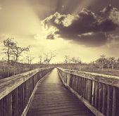 Boardwalk bataklık — Stok fotoğraf