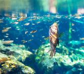 Peixe na água — Foto Stock