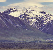 Bergen op alaska — Stockfoto
