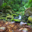Foto de Stock  : Creek in forest