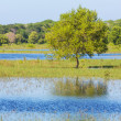 Flooded field — Stock Photo #40867467