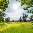 Stock Photo: Summer grassland