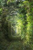 Trees alley — Stock Photo