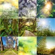 Green collage — Stock Photo #41925485