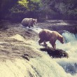图库照片: Brown bears on Alaska