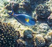 Peixes de coral — Fotografia Stock