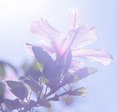 тропические цветы — Стоковое фото