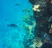 Poissons coralliens — Photo