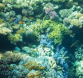 Korálové ryby — Stock fotografie