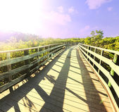 Boardwalk in swamp — Stock Photo