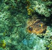 Koraal vissen — Stockfoto
