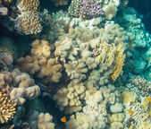 Coral reef — Foto Stock
