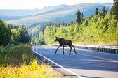 ムース — ストック写真
