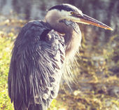 Heron in Everglades — Stock Photo