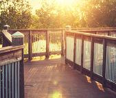 Boardwalk in swamp — Stock Photo