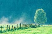 孤独的树 — 图库照片