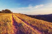 дорога в поле — Стоковое фото