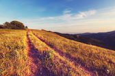 フィールドの道 — ストック写真