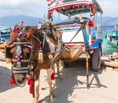 Gili transport — Stock Photo