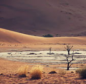 Namib — Stock Photo