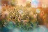 Flowers meadow — Stock Photo