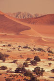 Dead valley in Namibia — Stock Photo