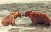 Bears on Alaska — Stockfoto