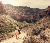 Horse in Grand Canyon — Stock Photo
