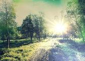 在森林里的路 — 图库照片