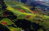 Fields in Java — Stock Photo