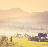 Field in Indonesia — Stock Photo