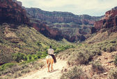 Horse hiking in Grand Canyon — Stock Photo
