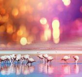Flamingo no lago — Foto Stock