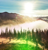 лес на аляске — Стоковое фото