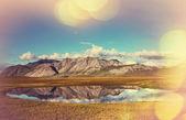 тундра на аляске — Стоковое фото