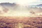Fog on meadow — Stock Photo