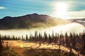 关于阿拉斯加的森林 — 图库照片