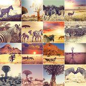 非洲野生动物园 — 图库照片
