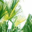 The verdure butterfly palm leave. — Stock Photo