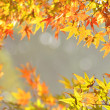 The colorful maple leaves in autumn day. — Stockfoto