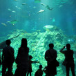Silhouettes of against a big aquarium — Stock Photo #27387421