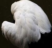 White wing — Stock Photo