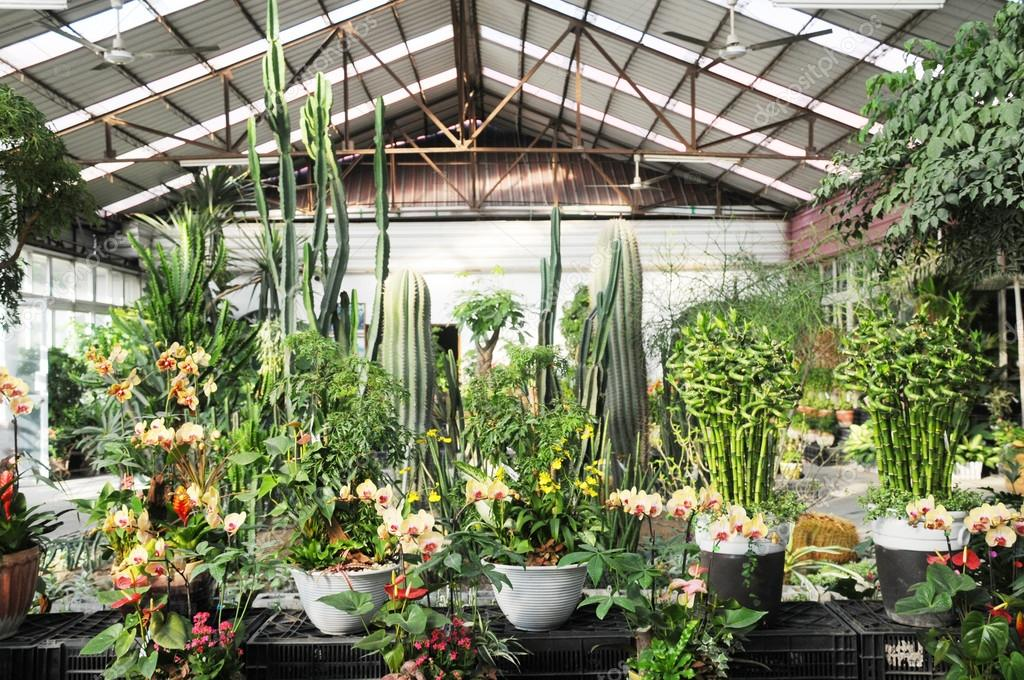 Indoor Tropical Plants Modern Conservatory Garden With Many Tropical Indoor Ornamental Plants
