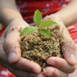 The cupped hands of a girl holding a sprouting seedling in earth. — Stock Photo