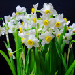 Bouquet from beautiful white narcissus in vase isolated on black background — Stock Photo